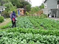 backyard-farm